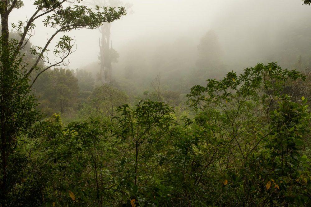 Drifting fog at Dawn, Mount Totumas, Panama.
